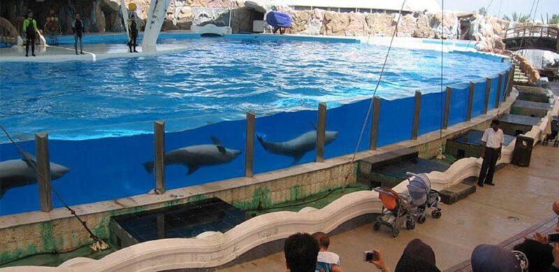 آشنایی با پارک دلفین کیش