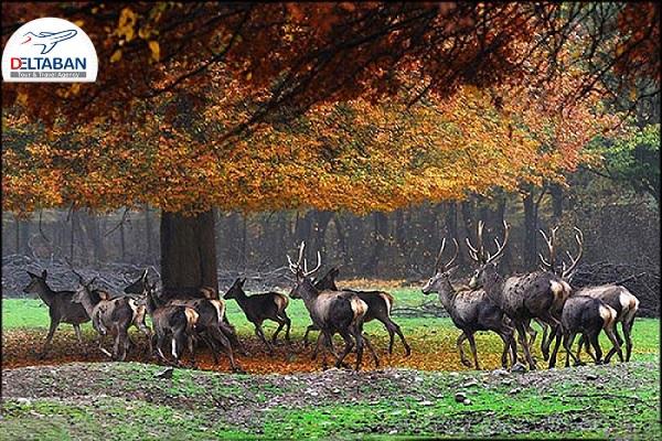 جنگل گلستان