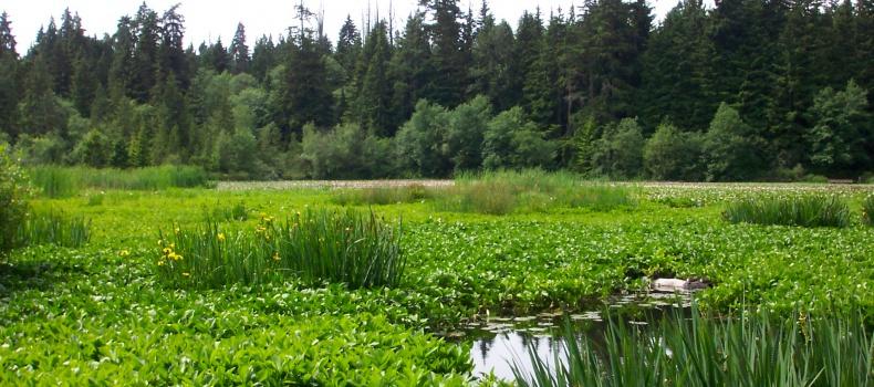 دریاچه بیور ونکور
