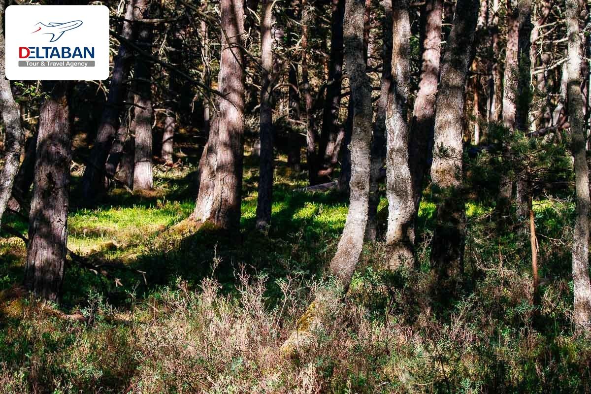 تپه های شنی اسلووینسکی لهستان
