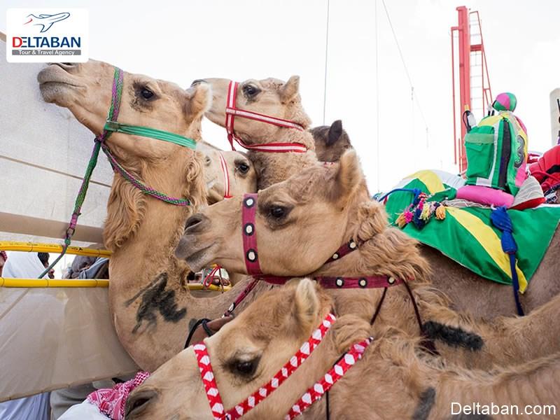 کمل پلو از جمله تفریحات ورزشی دبی