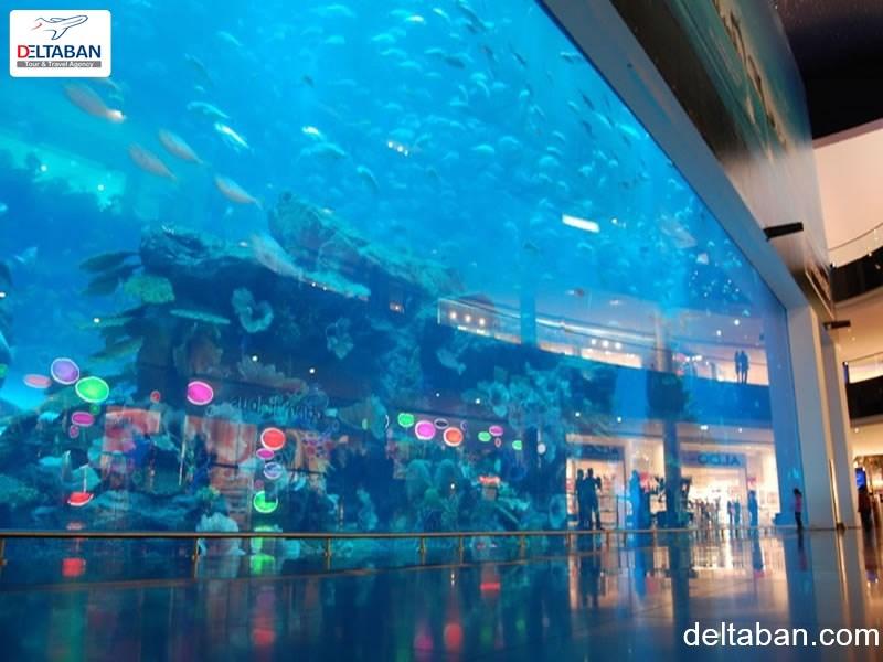 بزرگترین آکواریوم ماهی دبی مال