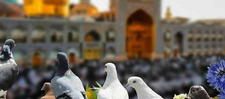 تصویری زیبا از حرم مطهر امام رضا و کبوترهایش
