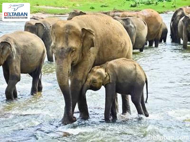 یتیم خانه فیل ها از جاذبه های تاریخی کندی