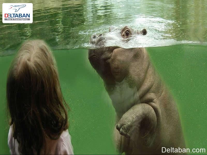 باغ وحش های کلن از تفریحات کلن