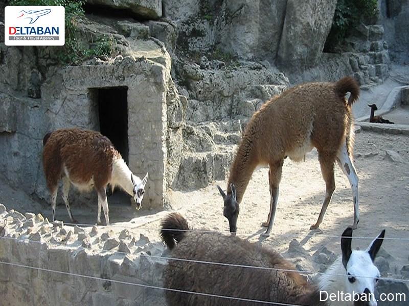باغ وحش و باغ گیاه شناسی بوداپست