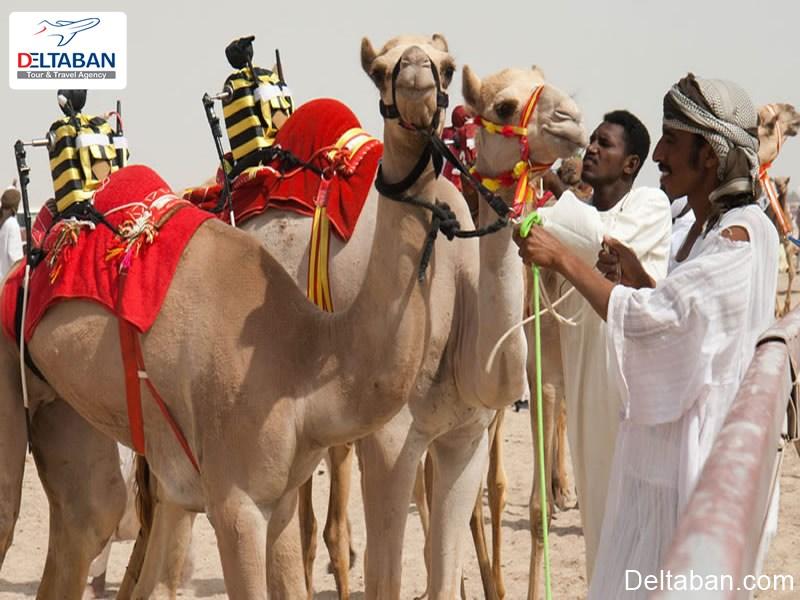 مسابقه شترسواری در دبی از شوکه کننده ترین حقایق دبی
