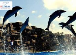 برنامه های تفریحی پارک دلفین های گرجستان