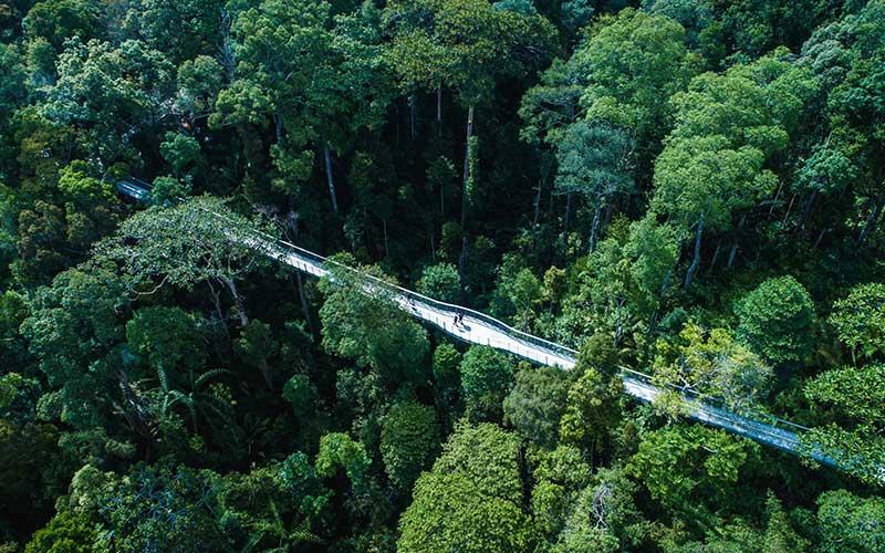 جنگل های پنانگ هیلز مالزی