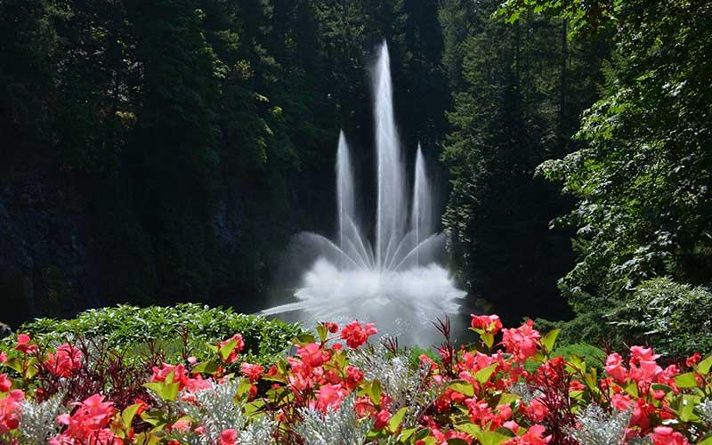 چشم اندازی زیبا از آبیاری باغ های بوچارت