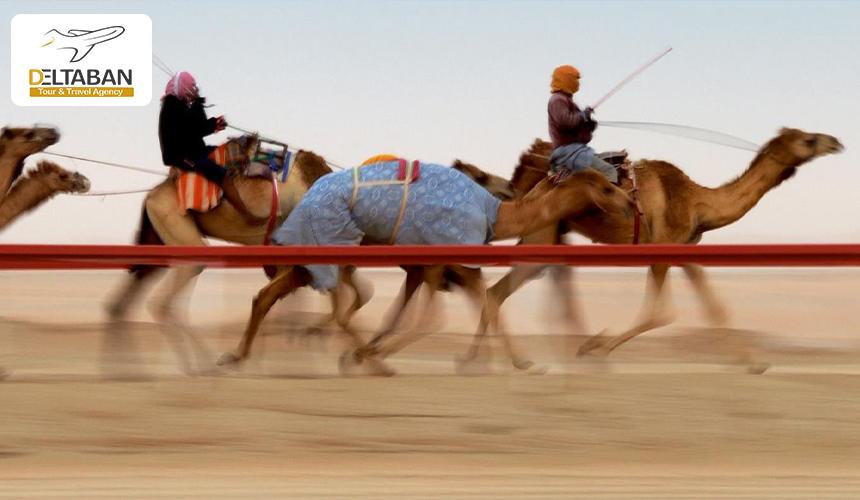 مسابقه شتر سواری از جاذبه های العین
