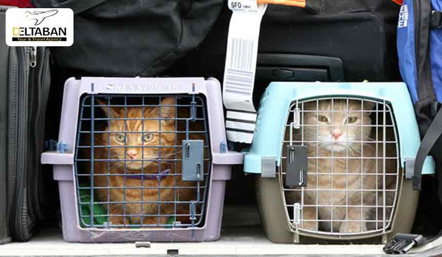 شرایط حمل حیوانات با هواپیما
