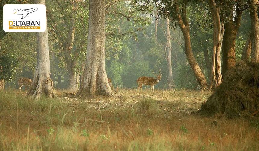 پارک ملی کانها از جاذبه های گردشگری هندوستان