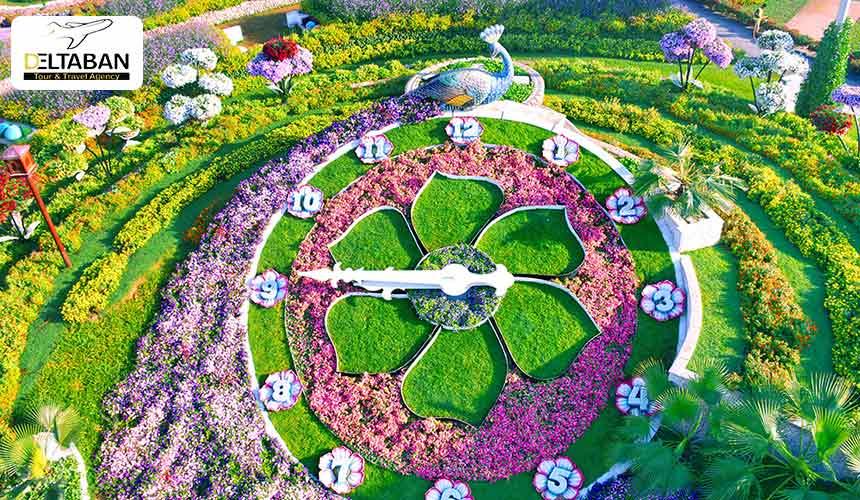 ساعت گُلی در باغ گل دبی