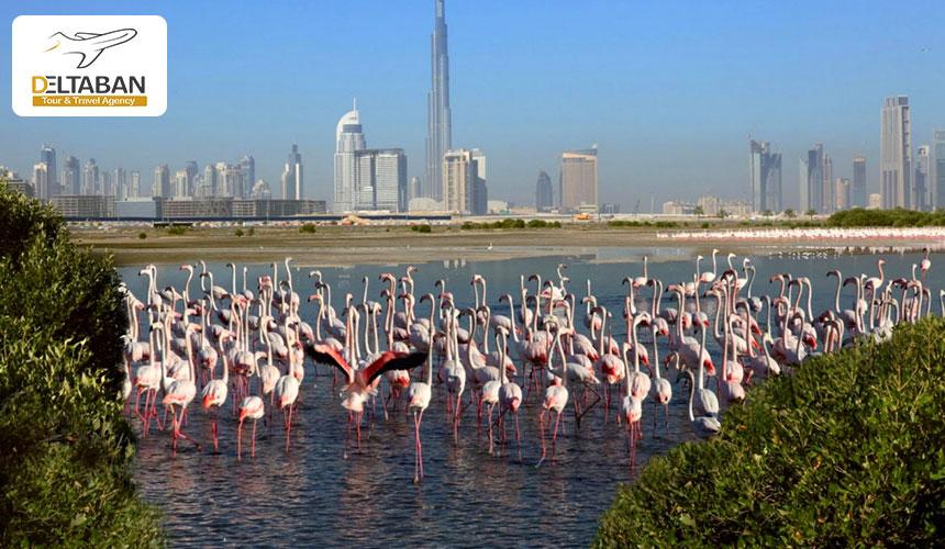 منظره شهر از داخل پارک خور دبی