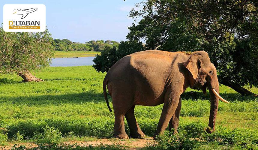 پارک ملی سریلانکا