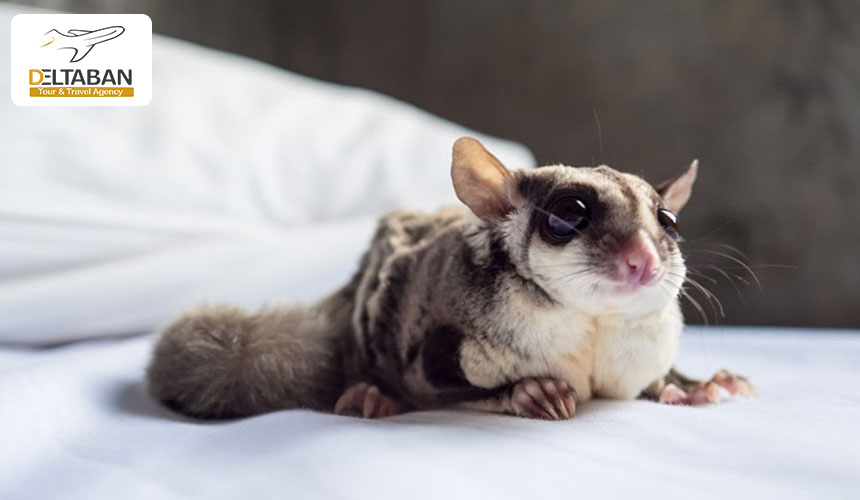 کوچکترین حیوانات در سیاره سبز