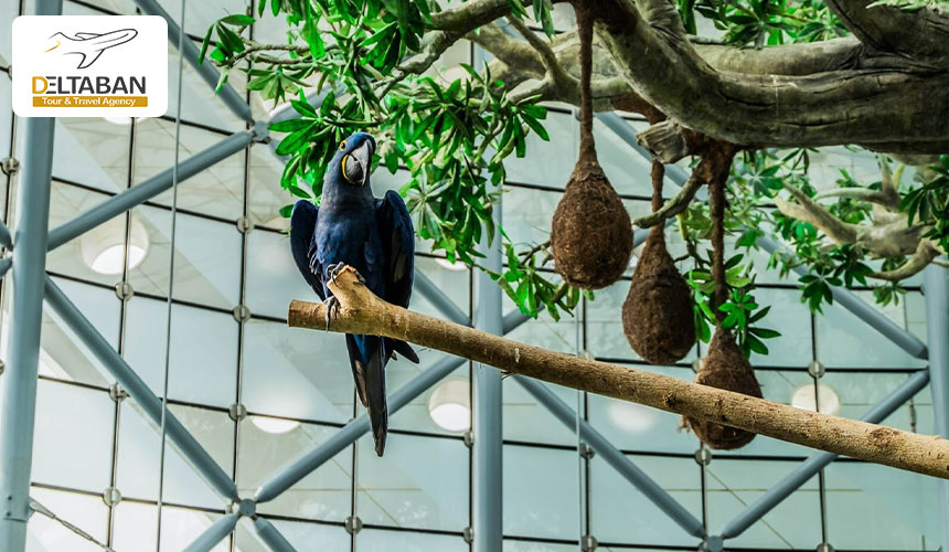 پرندگان در سیاره سبز