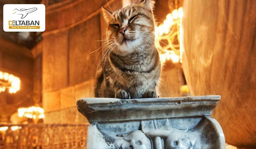 باغ وحش گربه ها