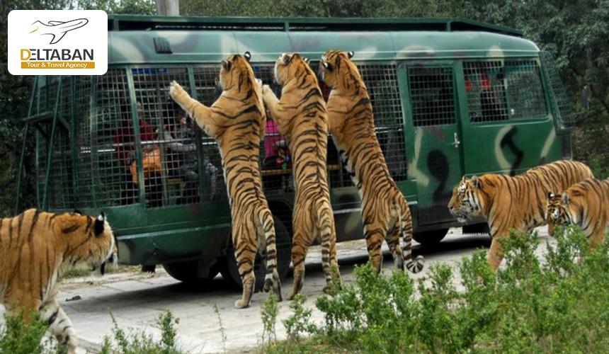 باغ وحش در استانبول
