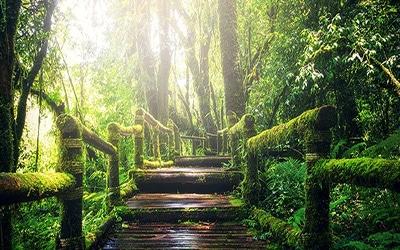 جنگل های زیبای رشت