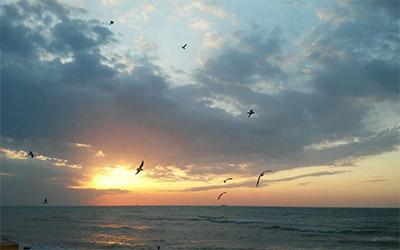تصویر زیبا ساحل خلیج فارس در شهر بوشهر