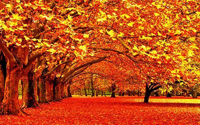 عکسی زیبا از پاییز ساری