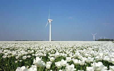 تصویری از گل های زیبای هلند