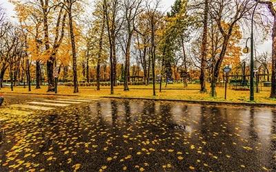 تصویری زیبا از یک پارک جنگلی در پاریس هنگام پاییز