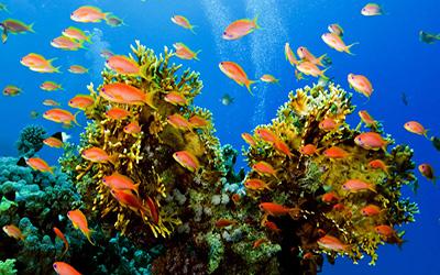 تصویری از ماهی ها در دریای کیش