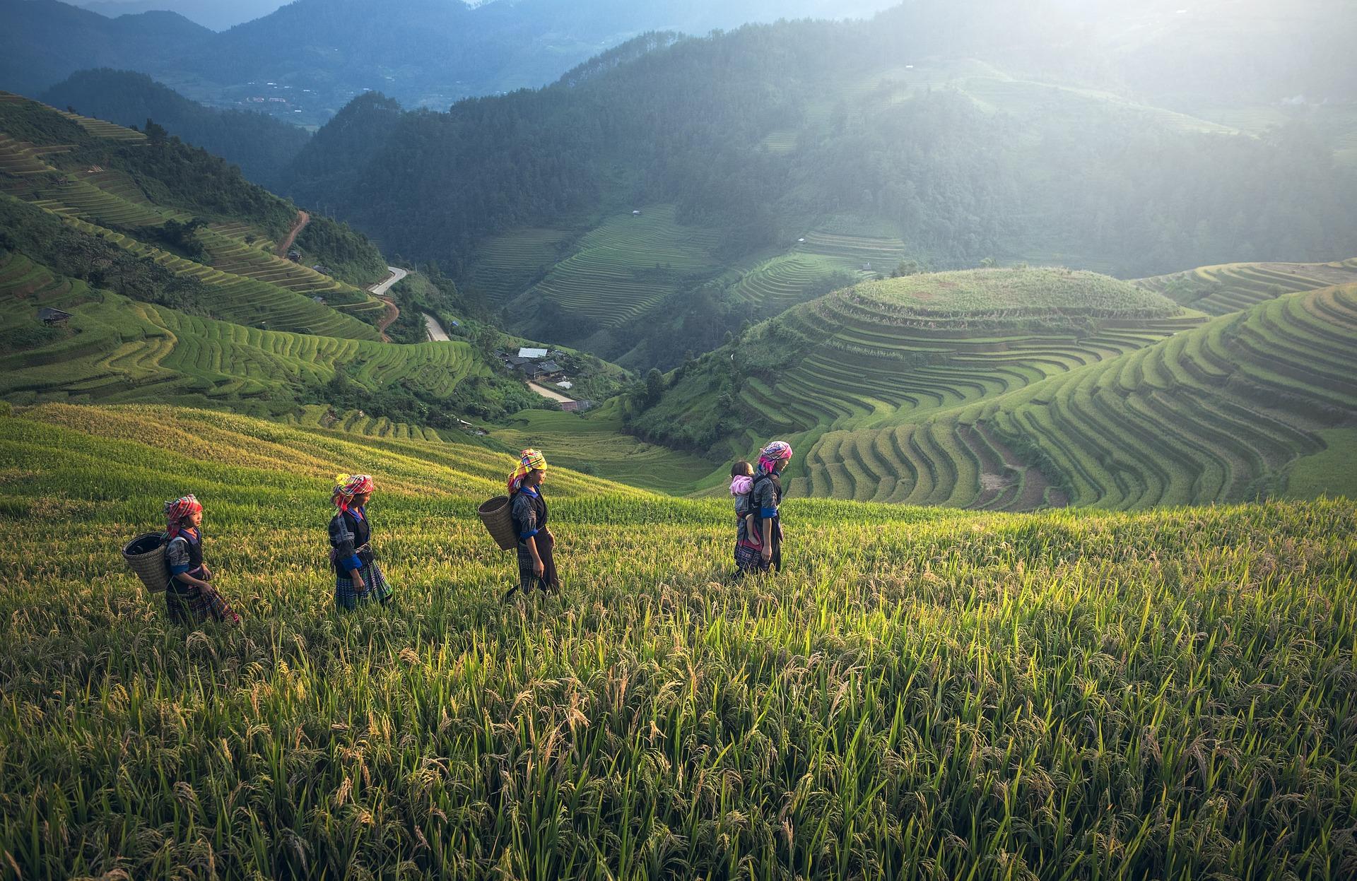 نمایی از مزارع سرسبز در تایلند