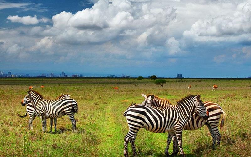 مناظر طبیعی کنیا