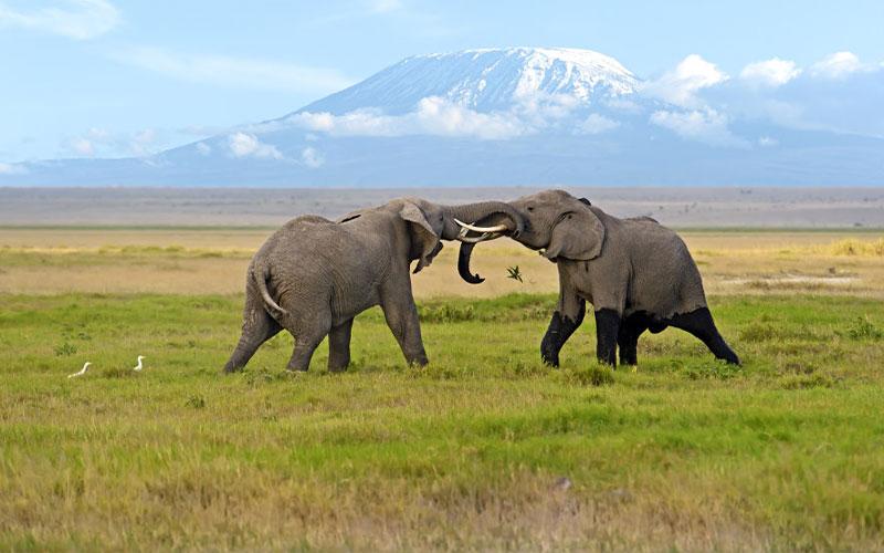 سفر به کنیا و بازدید از پارک ملی آمبوسلی