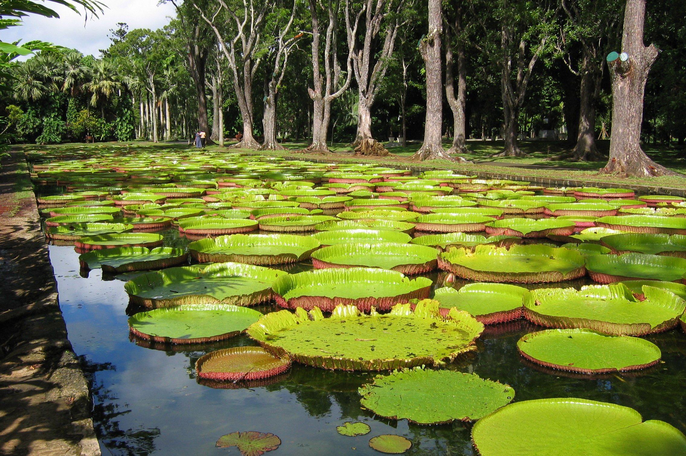 باغ گیاهشناسی از  جاذبههای مینسک